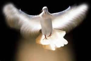 doveflight